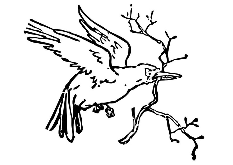 Coloring page bird with branch