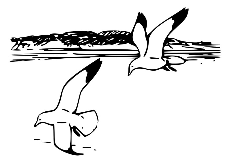 Coloring page birds - herring gulls