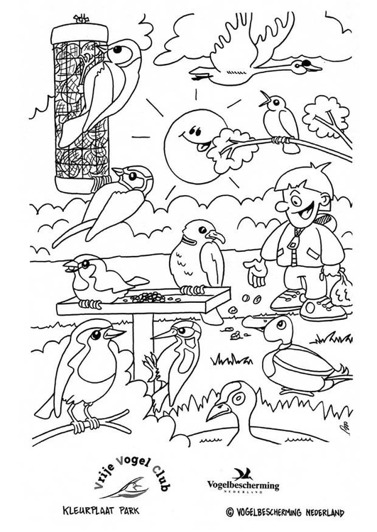 Coloring page birds in the park