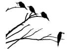 Coloring pages birds on a branch