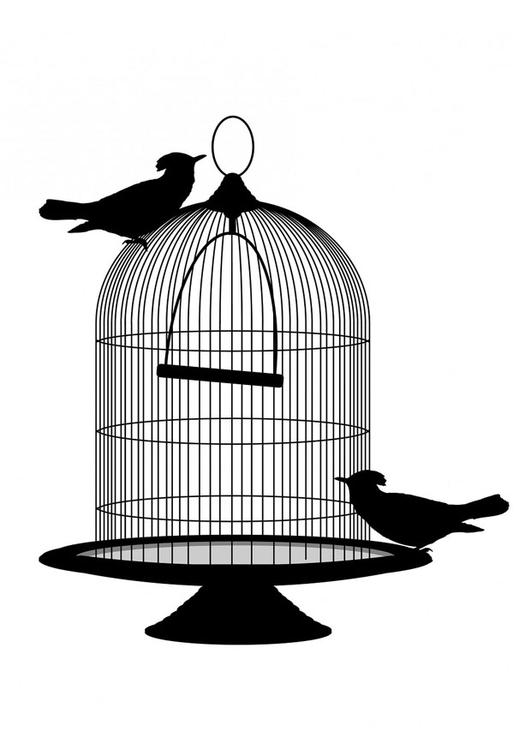 birds out of cage