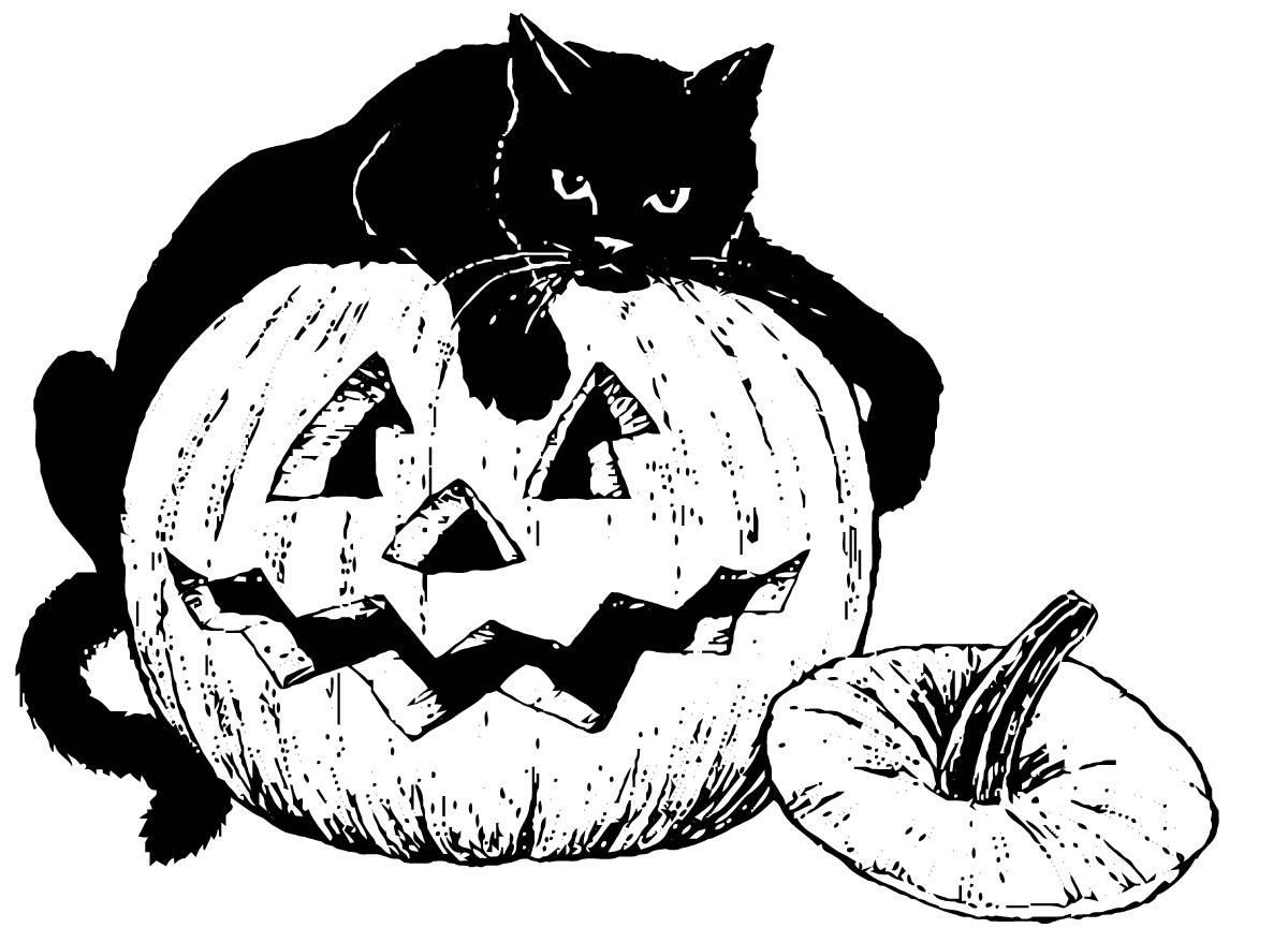 Coloring page black cat on pumpkin img 16101