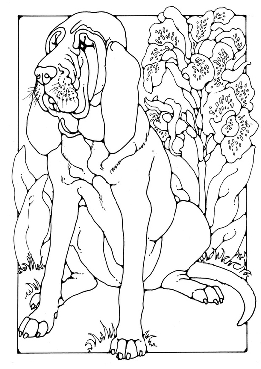 Coloring page bloodhound