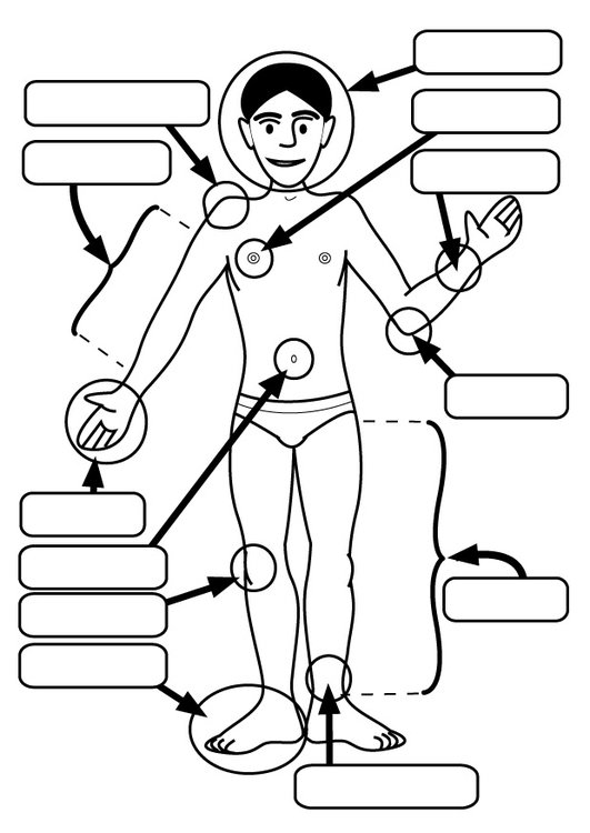 Coloring page body parts
