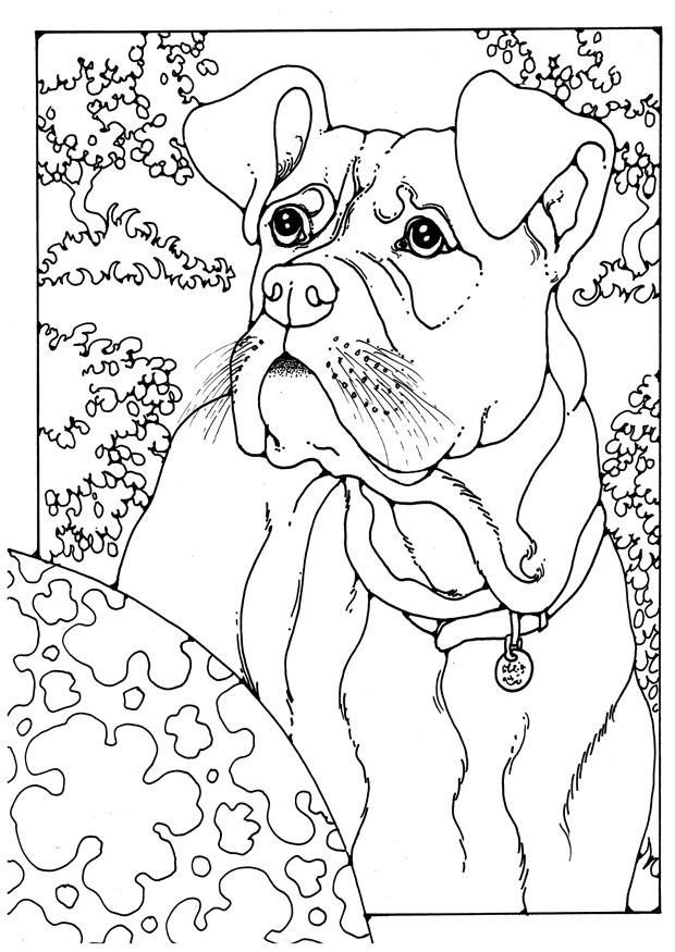 Coloring page boxer img 28204