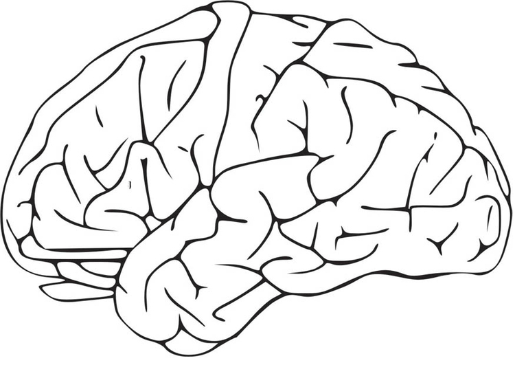 Coloring page Brain