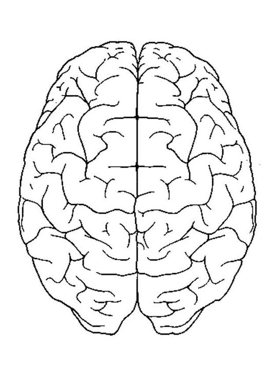 coloring page brain top view free printable coloring pages coloring page brain top view free