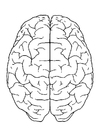 Coloring page brain, top view