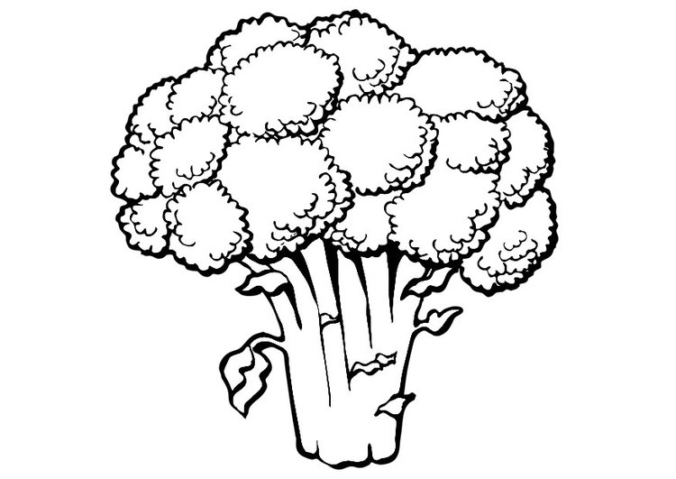 Coloring page broccoli - img 19173.