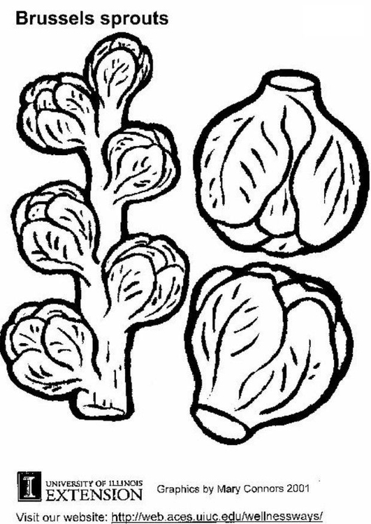 Coloring page brussels sprouts