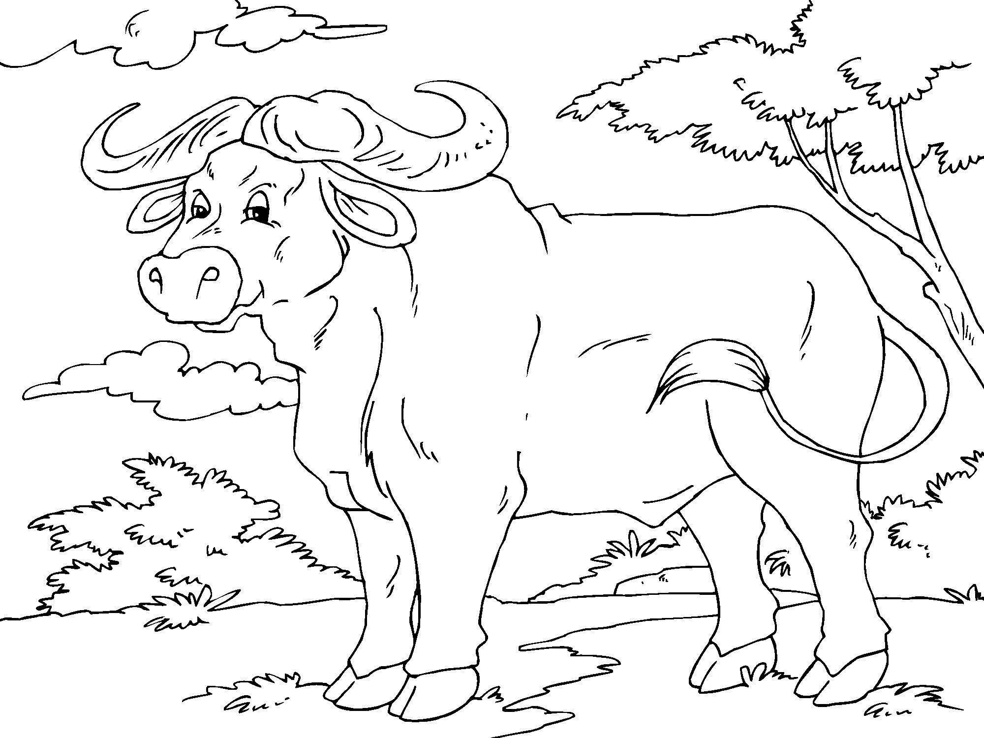 coloring page buffalo img 23014