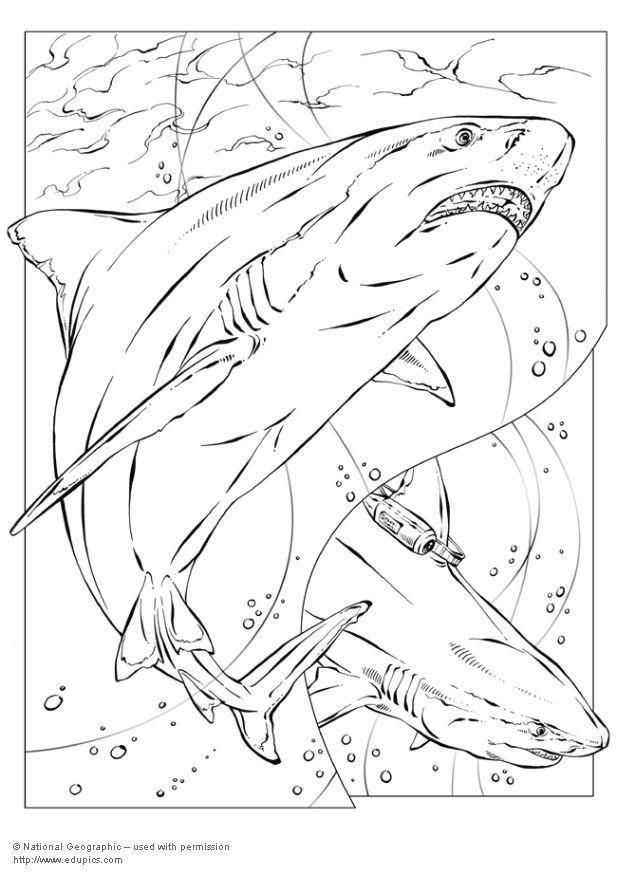 Coloring page bull shark img 5735