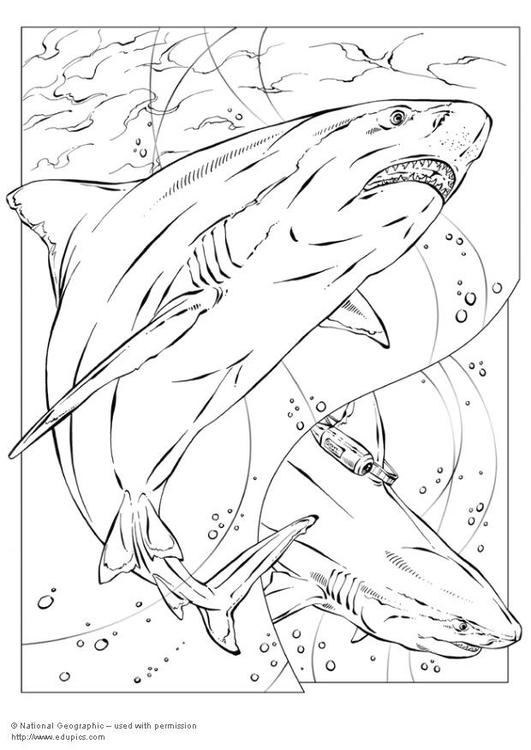 Coloring page bull shark
