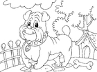 Coloring page bulldog