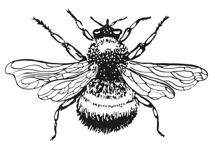 Coloring page Bumble-Bee