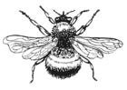 Coloring pages Bumble-Bee