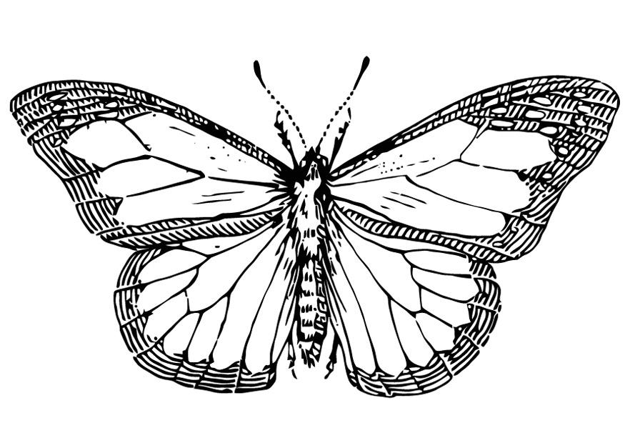 coloring page butterfly - img 13354. - Coloring Pages Butterfly Kids