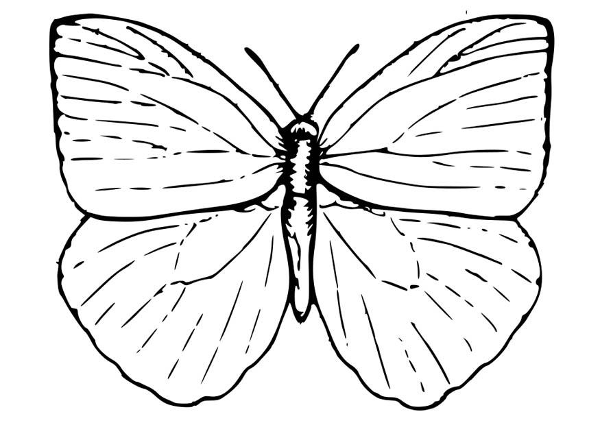 download large image - Coloring Page Butterfly