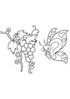 Coloring page butterfly in grapes