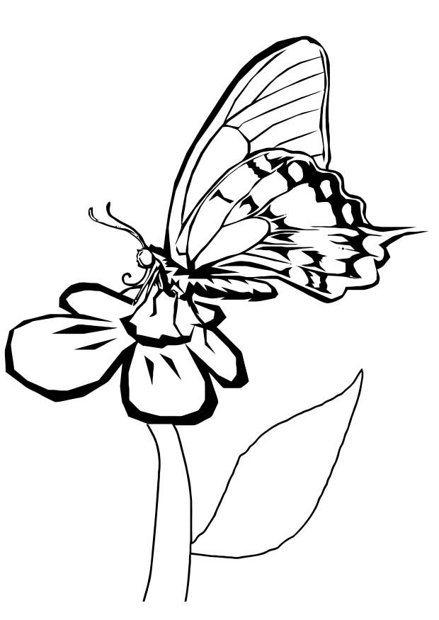 Coloring page butterfly on flower
