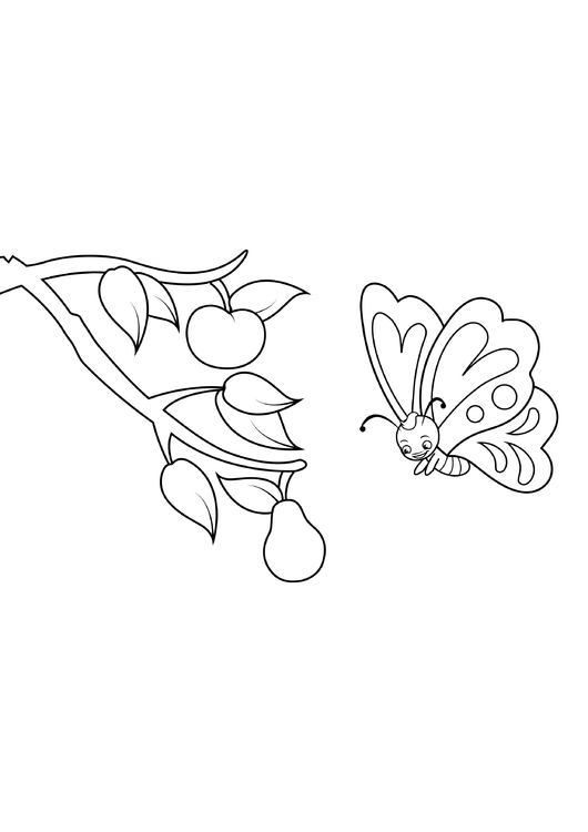 Coloring page butterfly sees pear