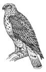 Coloring page buzzard