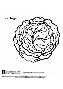 Coloring page cabbage