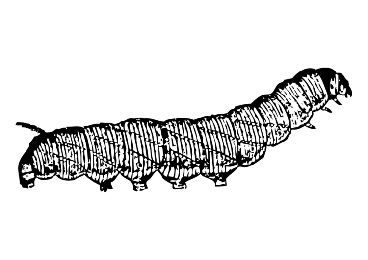 Coloring page caterpillar
