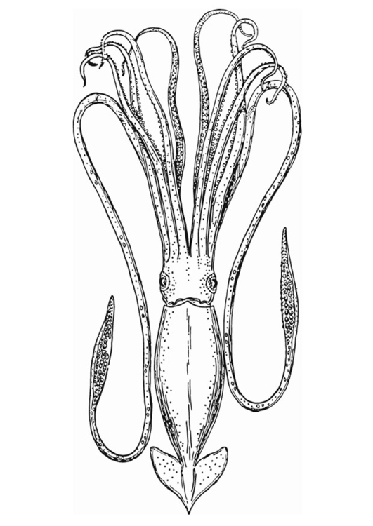 Coloring page cephalopod