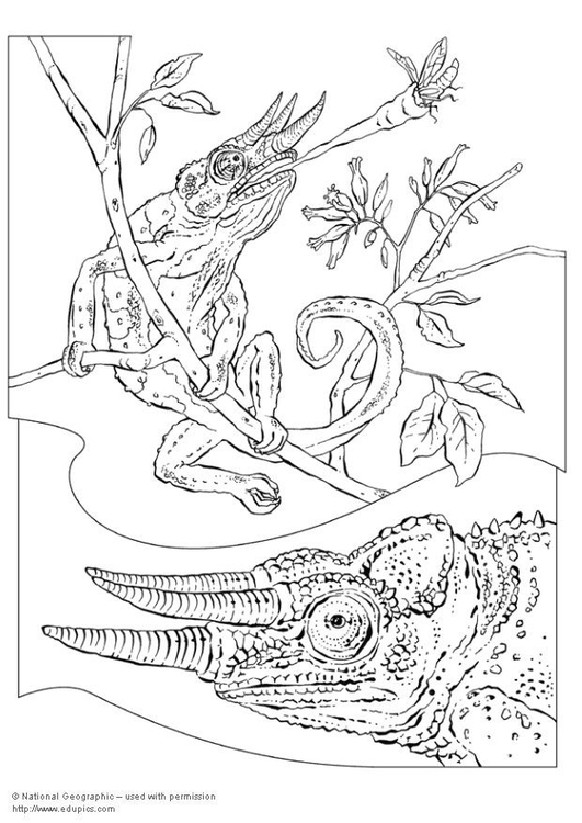 Coloring page chameleon