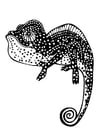 Coloring pages chameleon