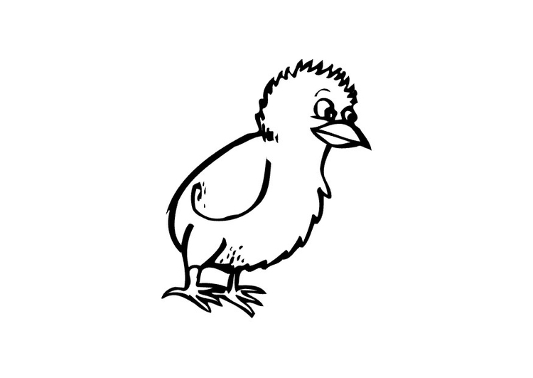 Coloring page chick