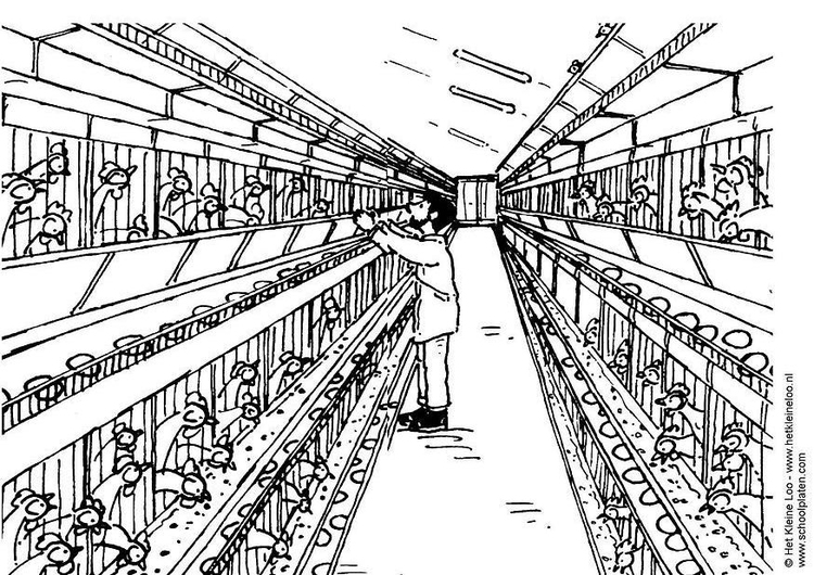 Coloring page chicken coop img 5531