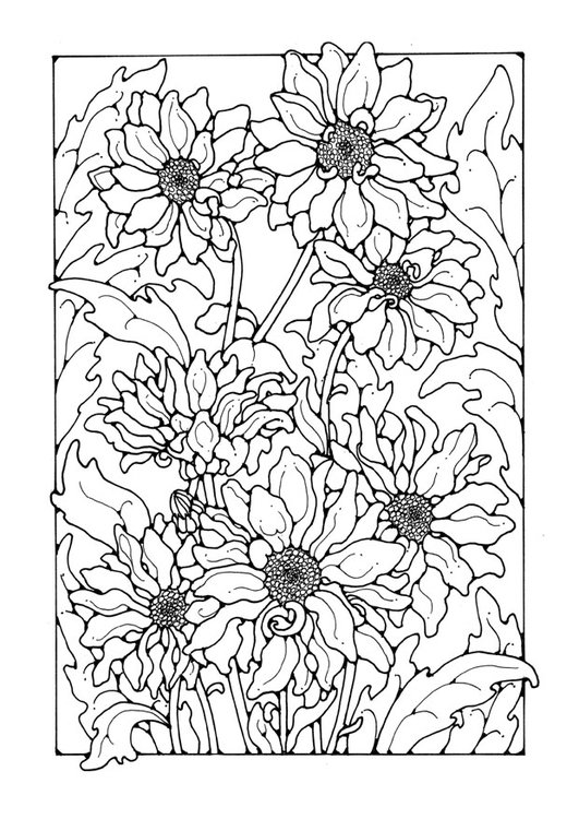Coloring page chrysanthemum