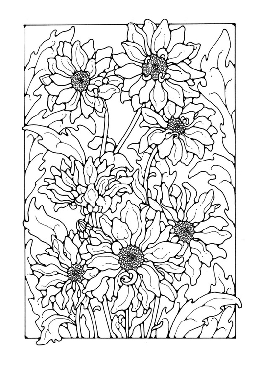 Coloring page chrysanths
