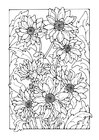 Coloring pages chrysanths