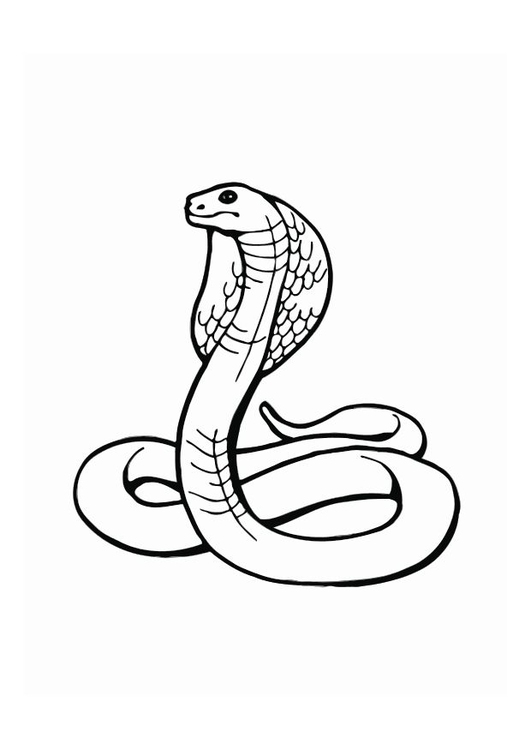 Coloring page cobra