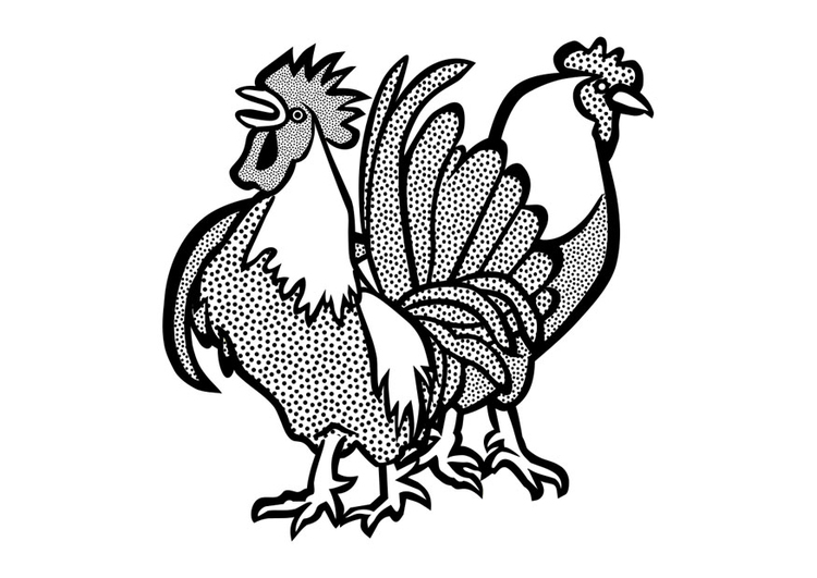 Coloring page cockerel and hen