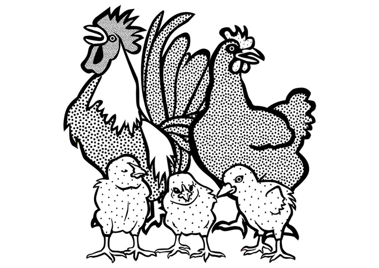Coloring page cockerel, hen and chicks