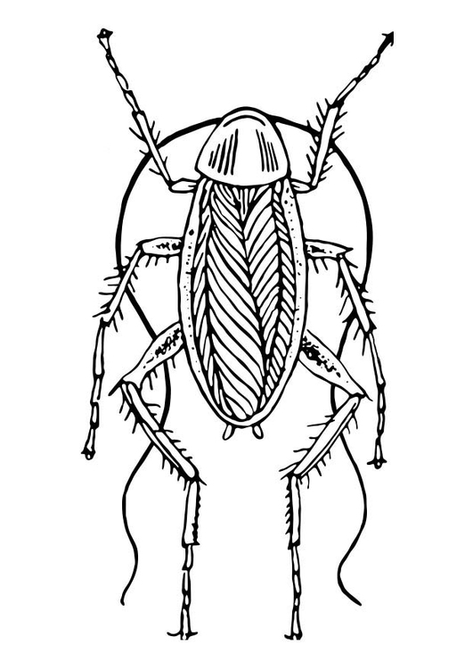 Coloring page Cockraoch