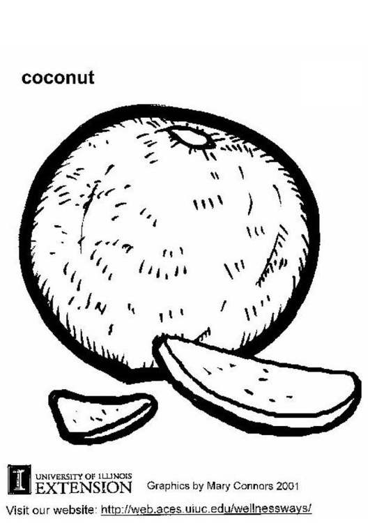 Coloring page coconut