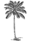 Coloring page coconut tree