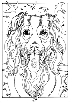 Coloring page collie