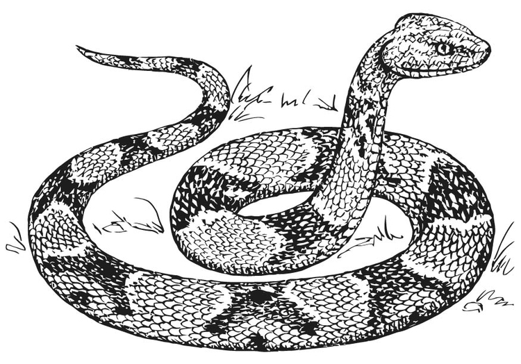 Coloring page copperhead snake