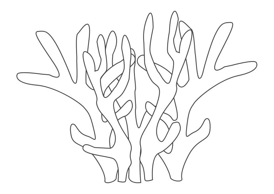 Coral Reef (Labeled) Coloring Page | 620x875