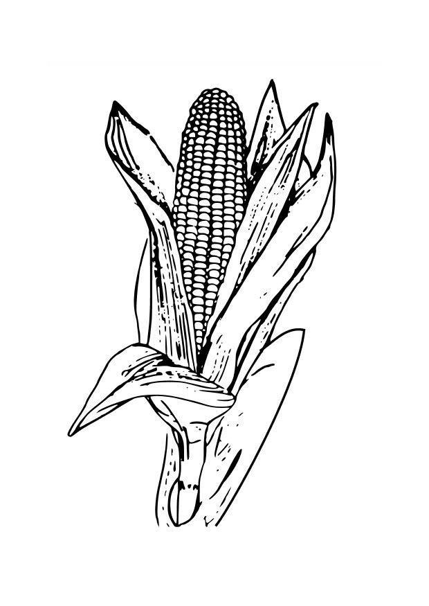 corn plant coloring pages - photo#16
