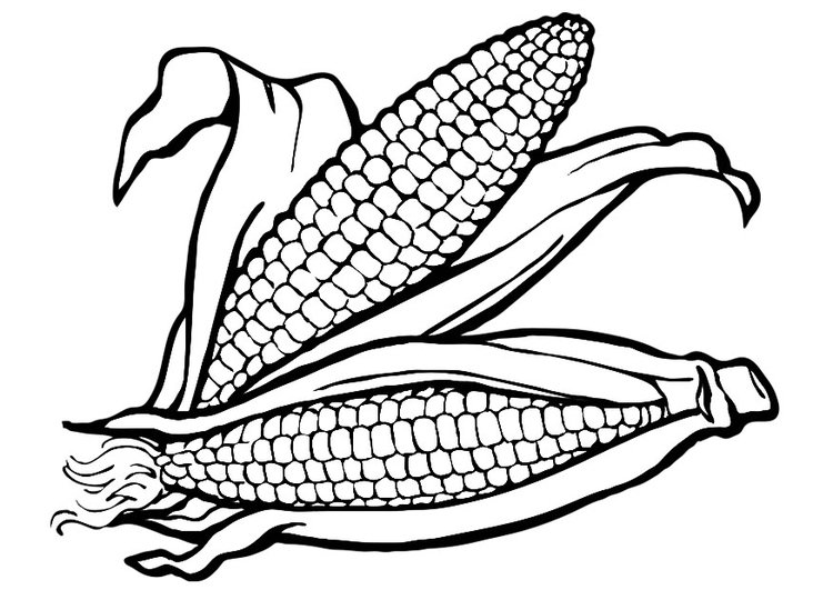 Coloring Page Corn Img 23256 Corn Coloring Page