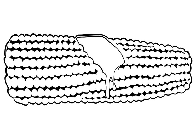 Coloring page corn on the cob