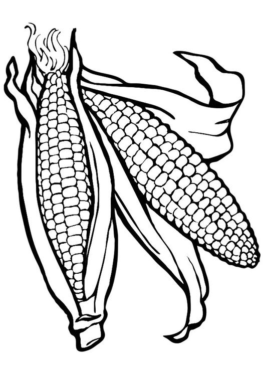 corn coloring pages printable. see best photos of corn template ...