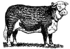 Coloring page cow - hereford